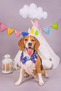 Vedha Dog and Family Photoshoot (1)