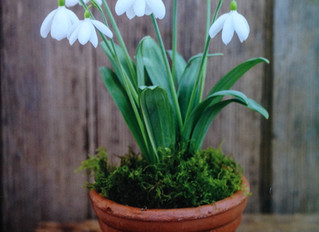 Two snowdrops with famous names..