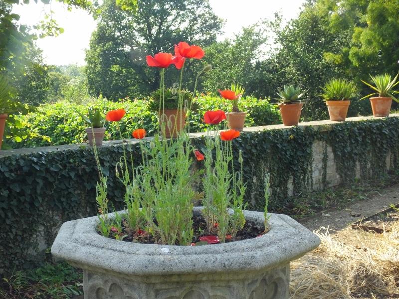 11. Poppies