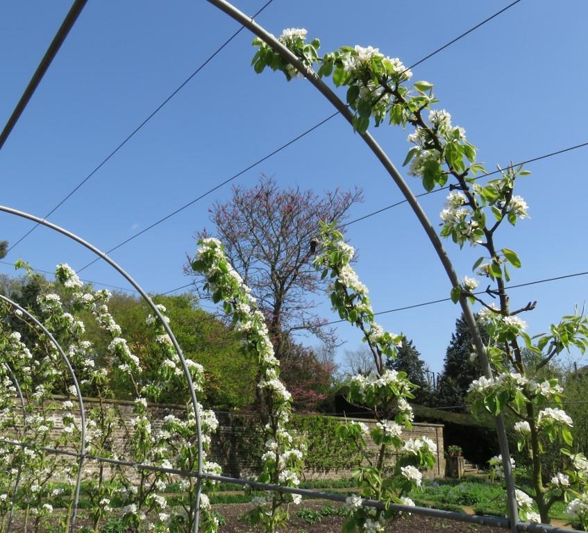 10. Pear Arch Blossom