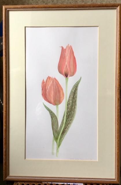 Tulips Greigii