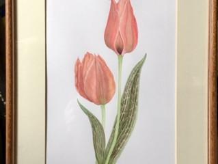 Jill Kidger: Myddelton Botanical Artist