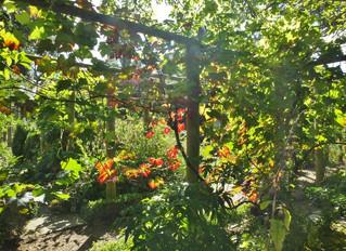 Jo's Garden Diary September