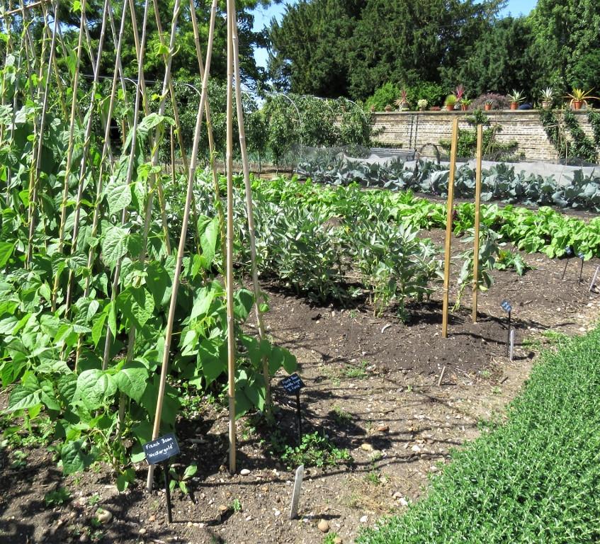 35. Kitchen Garden (1024x768)