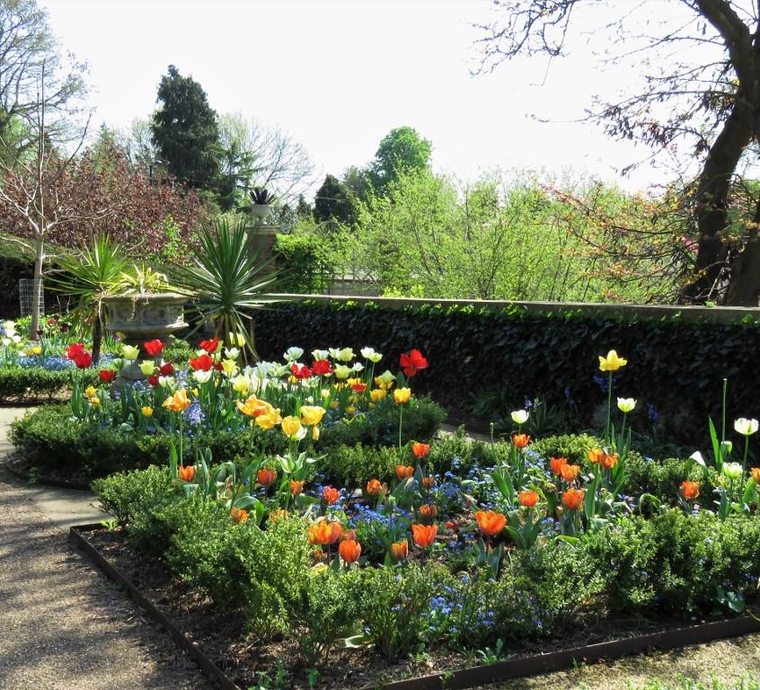 7. Tulip Terrace
