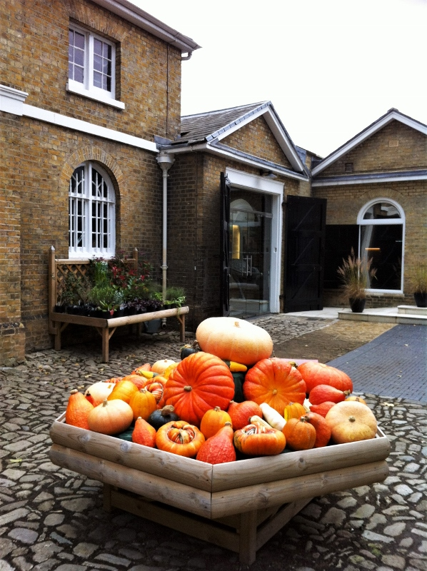 24. Pumkins and Squashes