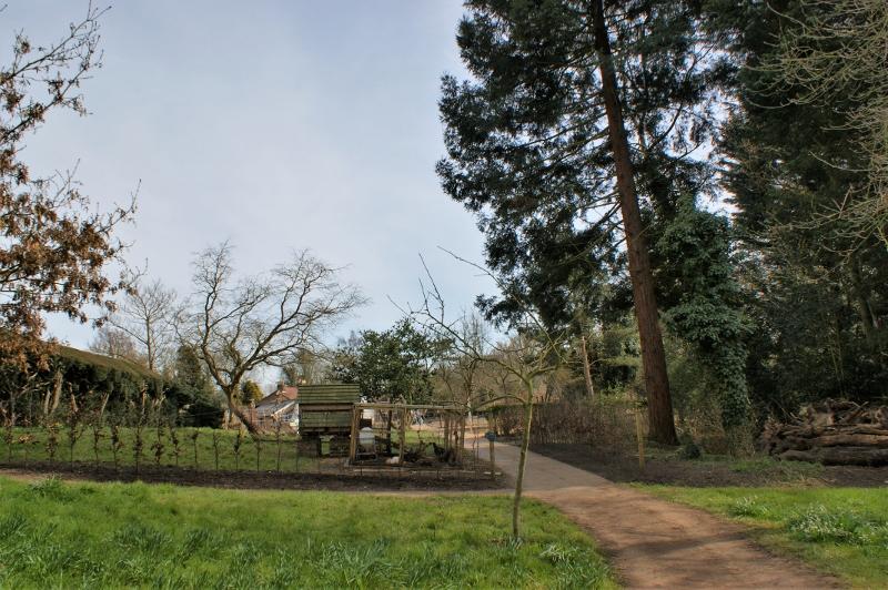 8. Chickens & Beech Hedge