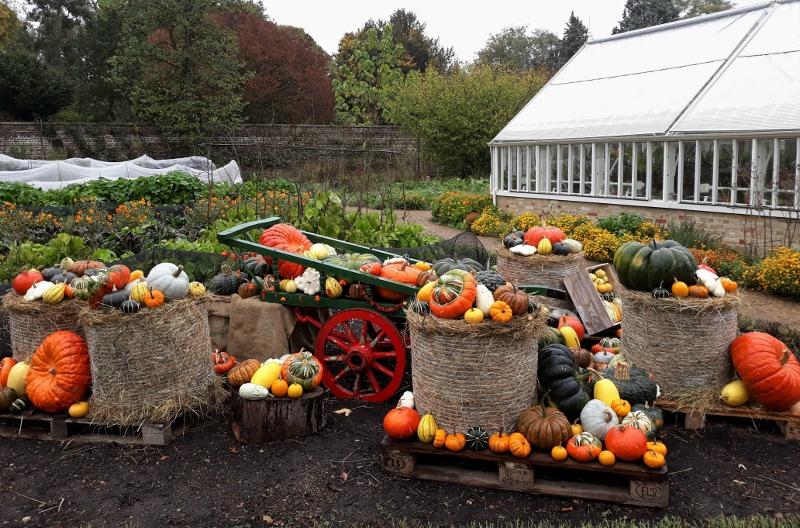 15. Pumpkin & Squashes