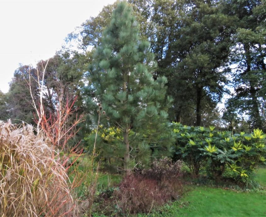1. Arboretum