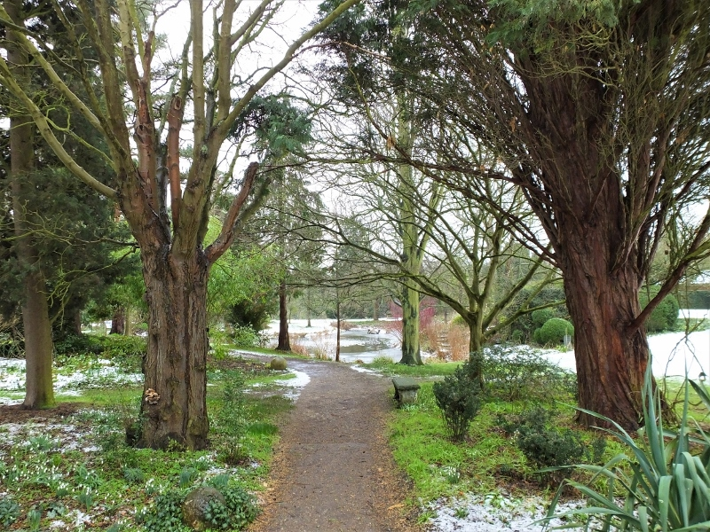 4. Walkway to the Pond(1)