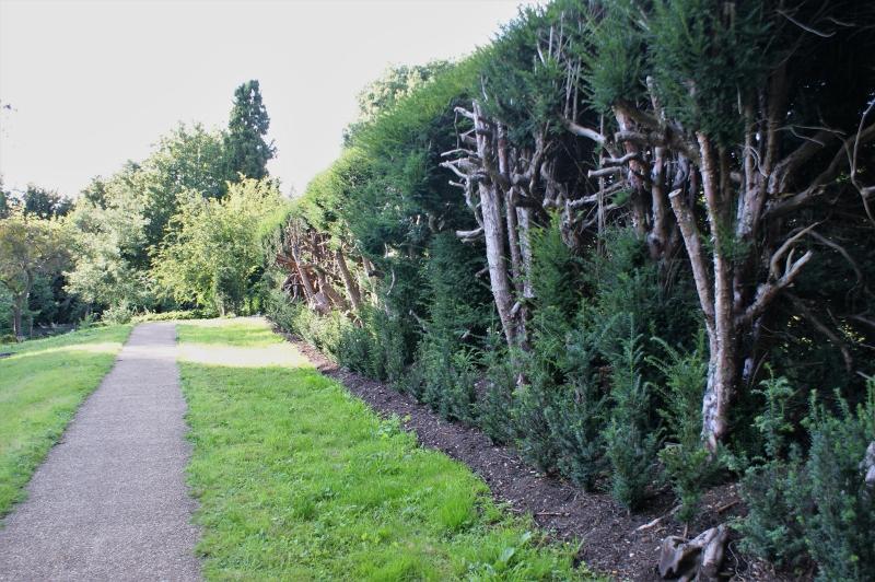 18. Renewed Hedge - May 2011