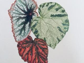 Jill's Botanicals