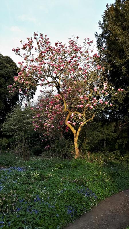 10. Magnolia