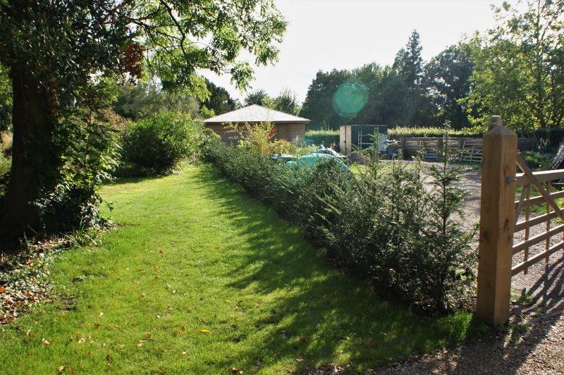 17. New Hedge - Aug 2011