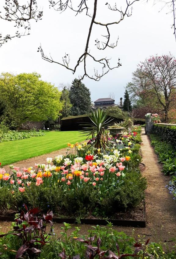6. Tulip Terrace