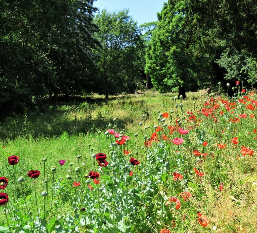 29. Poppies (1024x768)