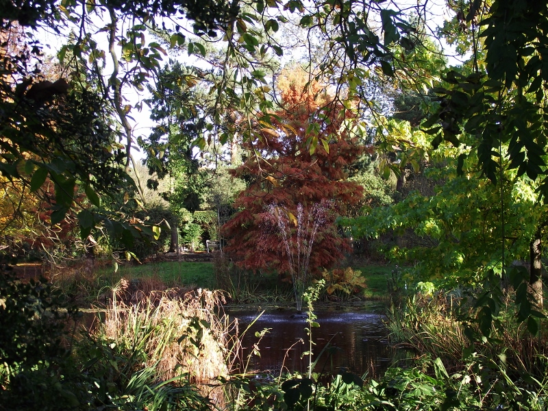 25. Swamp Cypress