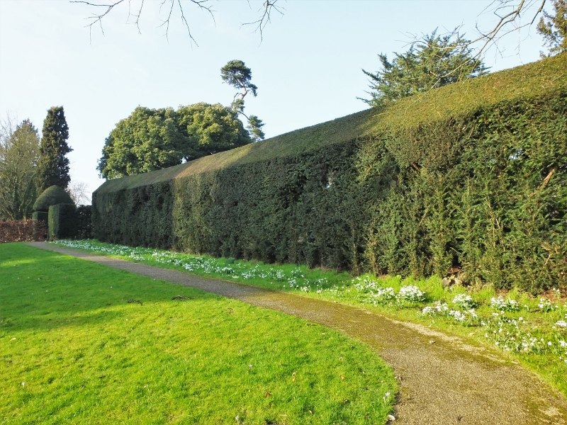 2. Renovated Hedge