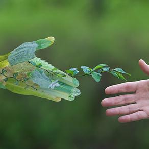 Aprender a mercadear la sostenibilidad, el primer paso para convertirla en ventaja competitiva