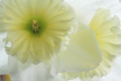 Blumen, Trauerfeier