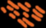 Espression_Strokes_Orange.png