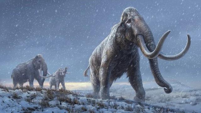 Hình minh họa mô tả sự tái tạo của những con voi ma mút thảo nguyên trước loài voi ma mút lông cừu, dựa trên kiến thức di truyền mà chúng ta hiện có từ loài voi ma mút Adycha. Hình minh họa: Beth Zaiken / Trung tâm Cổ sinh vật học.