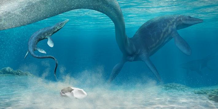 Khoảng khắc quả trứng nở và nằm lại đáy biển (Đồ họa: Hueichaleo)