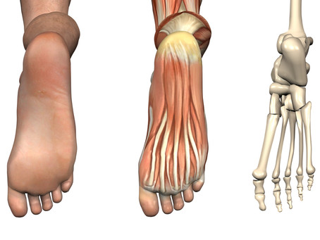 The Secret and Overlooked Connection Between The Foot and Ankle and Low Back Pain