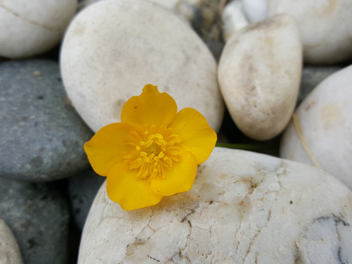The Ultimate Purpose of Inner Healing