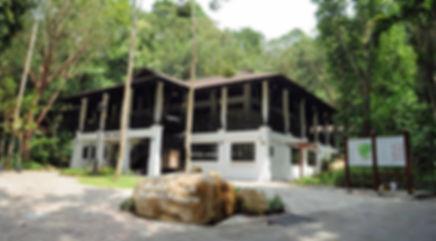 bukit-timah-nature-reserve-restored.jpg