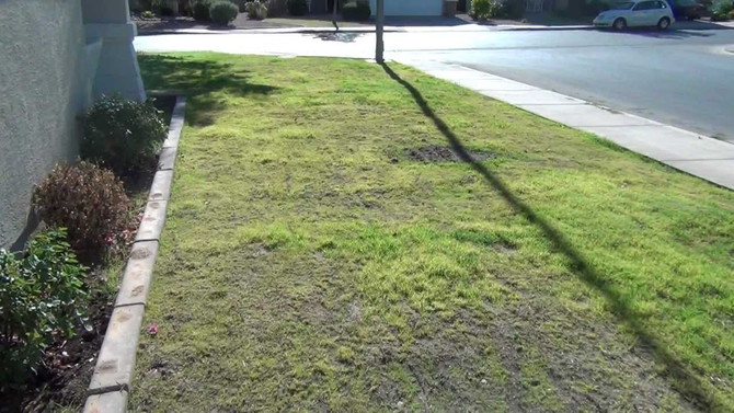 Humourous post about planting grass