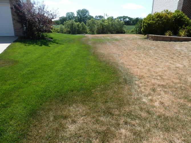 Is brown grass dead?