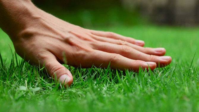 Tips for maintaining your lawn in the hot summer months