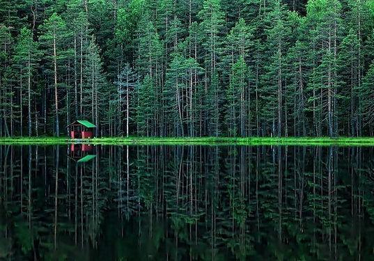 Природа лен. обл.jpg