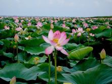 Dolina-lotosov.jpg