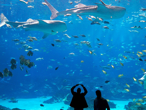 top 5 Aquariums and how they inspire us