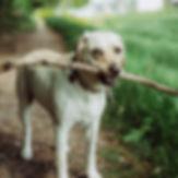 hound hikes dog hikes chambersburg pa