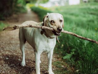 Gør din hund glad!