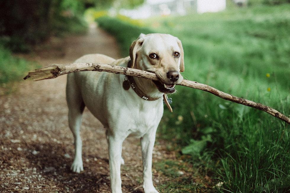 Fetching a Stick
