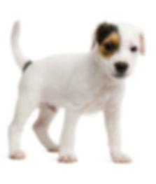 dogStanding-Shelton-L.jpg