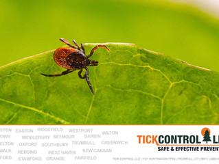 Part 1 of Myth-busting: Top Ten Tall Tales (and the Truth!) About Ticks
