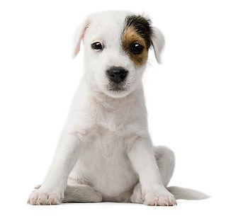 Tick-Control-LLC-dog-Sitting-Greenwich--L