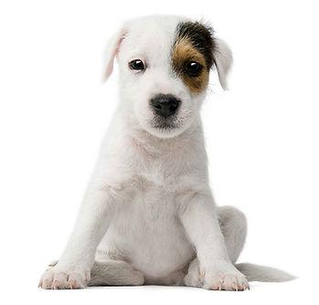 Tick-Control-LLC-dog-Sitting-Trumbull--L