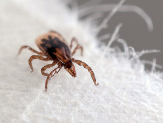 Myth-busting:Top Ten Tall Tales (and the Truth!) about Ticks Part 2