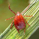 ASIAN-LONGHORNED-Tick-Control%252C-LLC_e
