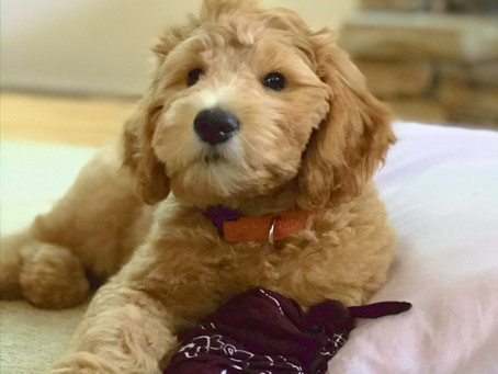 How do you teach your dog it's name?