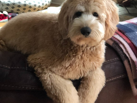 Desensitize Your Puppy - Clipping Nails and Grooming and More