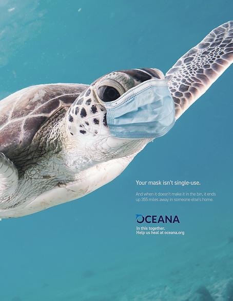 EPA animalsv2_turtle.png