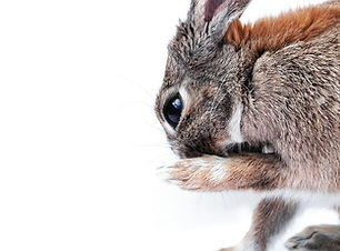 rabbitclean.jpg