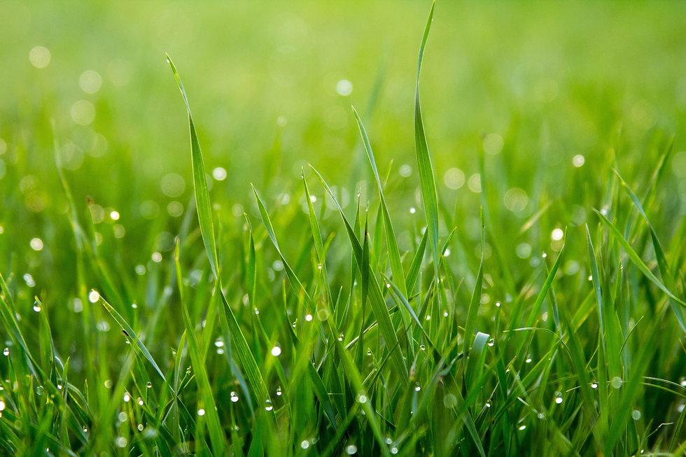 prettiest grass blades with dew-unsplash.jpg